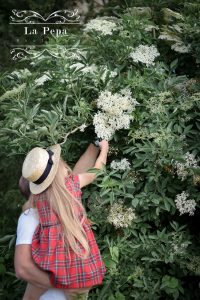 Eco Kitchen |  Foraging Elderflowers and Drying for Tea 13
