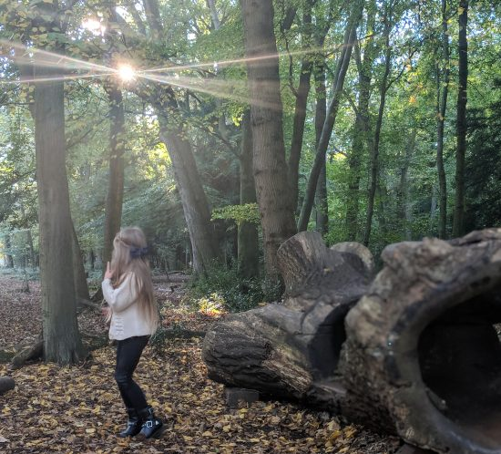 Wild Walks | Leigh Woods National Nature Reserve