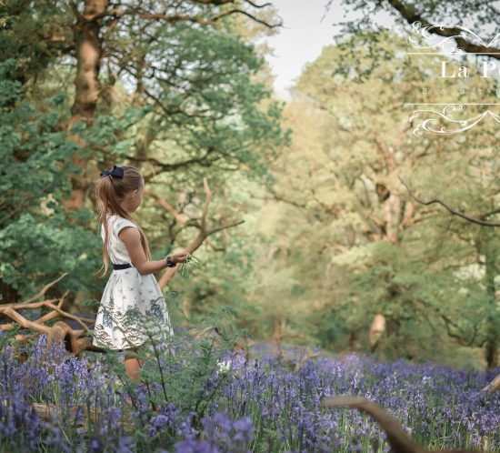 Wild Walks | Forest Bathing In the Sea of Bluebells 1