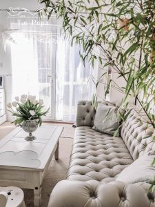Green Living | My Favourite Air Purifying Plants
