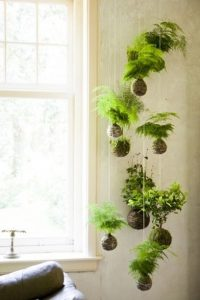 Green Living | The Joy of Plants - Creating Urban Jungle at Home 9