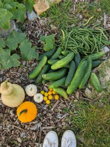 Green Living | My First Year on The Allotment 38