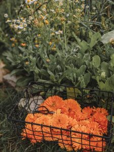 Green Living | My First Year on The Allotment 44