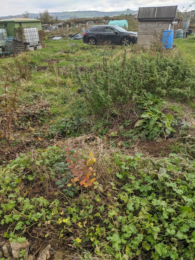 Green Living | My First Year on The Allotment