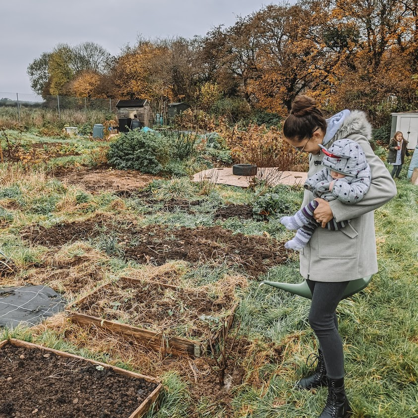 Green Living | My First Year on The Allotment 2