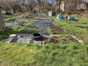 Green Living | My First Year on The Allotment 5