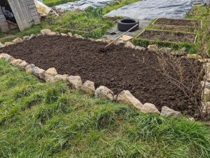 Green Living | My First Year on The Allotment 6