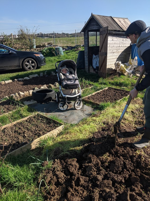Green Living | My First Year on The Allotment 9