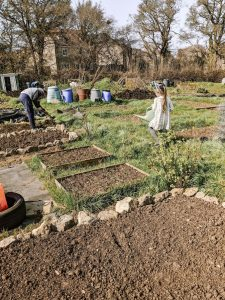 Green Living | My First Year on The Allotment 10