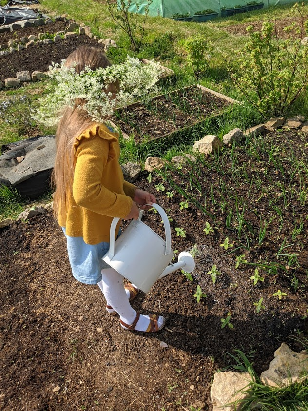 Green Living | My First Year on The Allotment 14