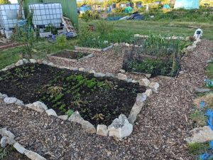 Green Living | My First Year on The Allotment 16