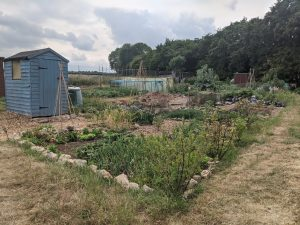 Green Living | My First Year on The Allotment 22