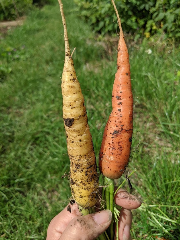 Green Living | My First Year on The Allotment 26