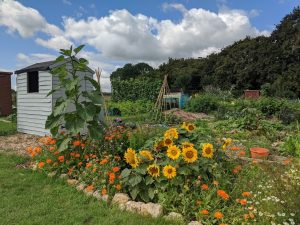 Green Living | My First Year on The Allotment 30