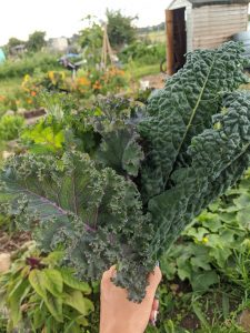 Green Living | My First Year on The Allotment 39