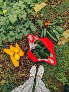 Green Living | My First Year on The Allotment 37