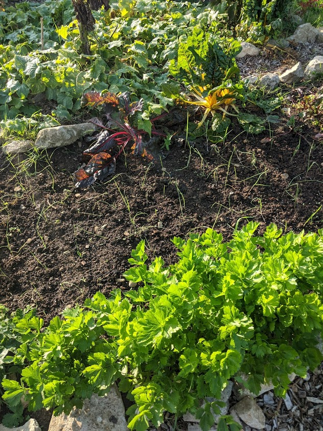 Green Living | My First Year on The Allotment 52