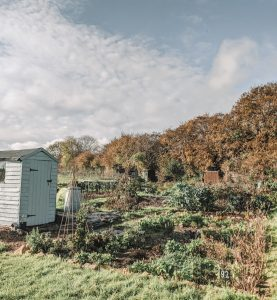 Green Living | My First Year on The Allotment 61