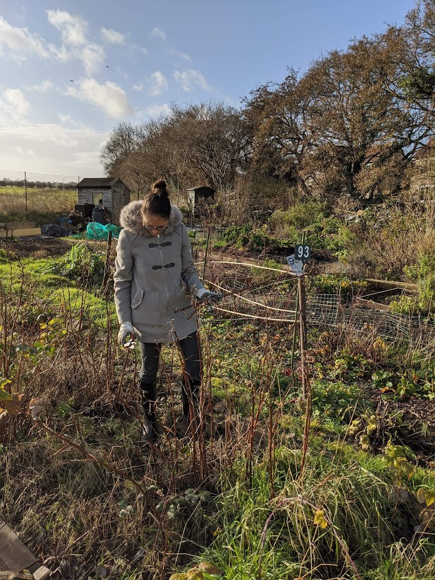 Green Living | My First Year on The Allotment 3